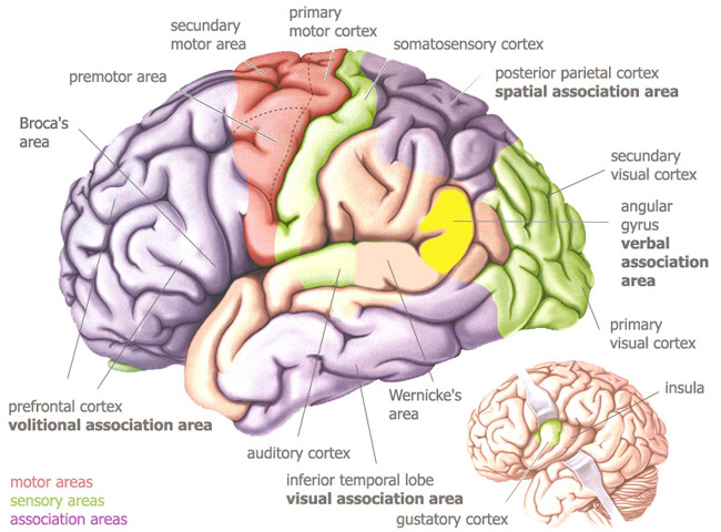 Neurophilosophy A Brain Hardwired For Spirituality